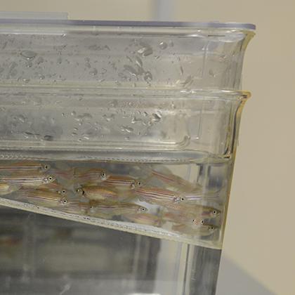 Platforms - Animal Models - Fish Platform