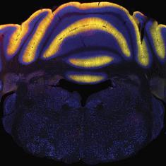 Neural Circuits and Behavior